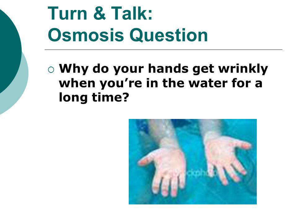 Turn & Talk: Osmosis Question