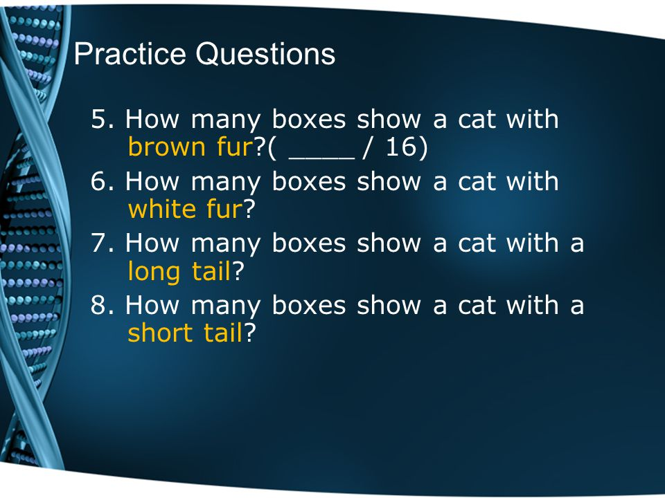 Practice Questions 5. How many boxes show a cat with brown fur ( ____ / 16) 6. How many boxes show a cat with white fur