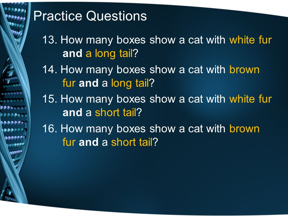 Practice Questions 13. How many boxes show a cat with white fur and a long tail 14. How many boxes show a cat with brown fur and a long tail