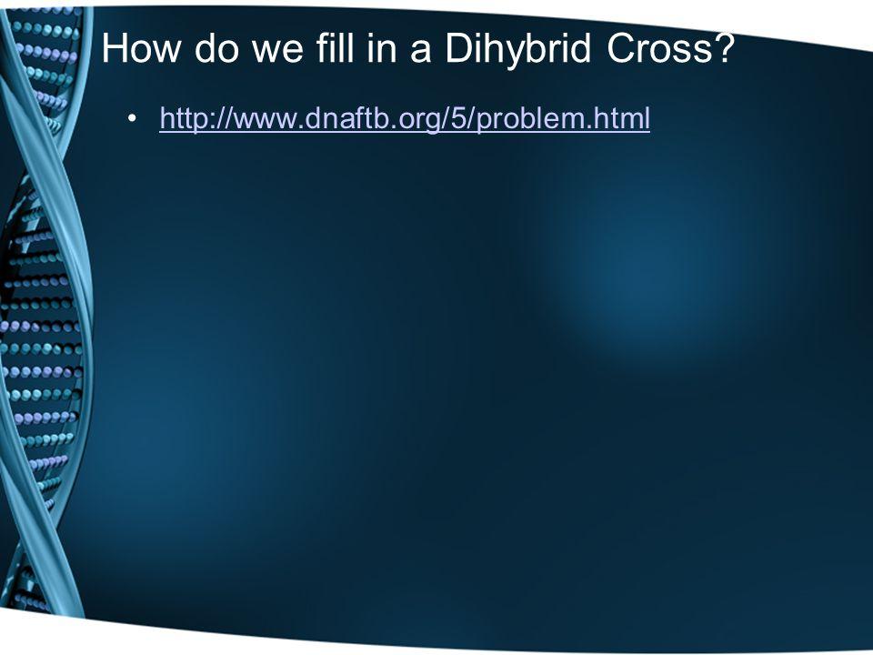 How do we fill in a Dihybrid Cross