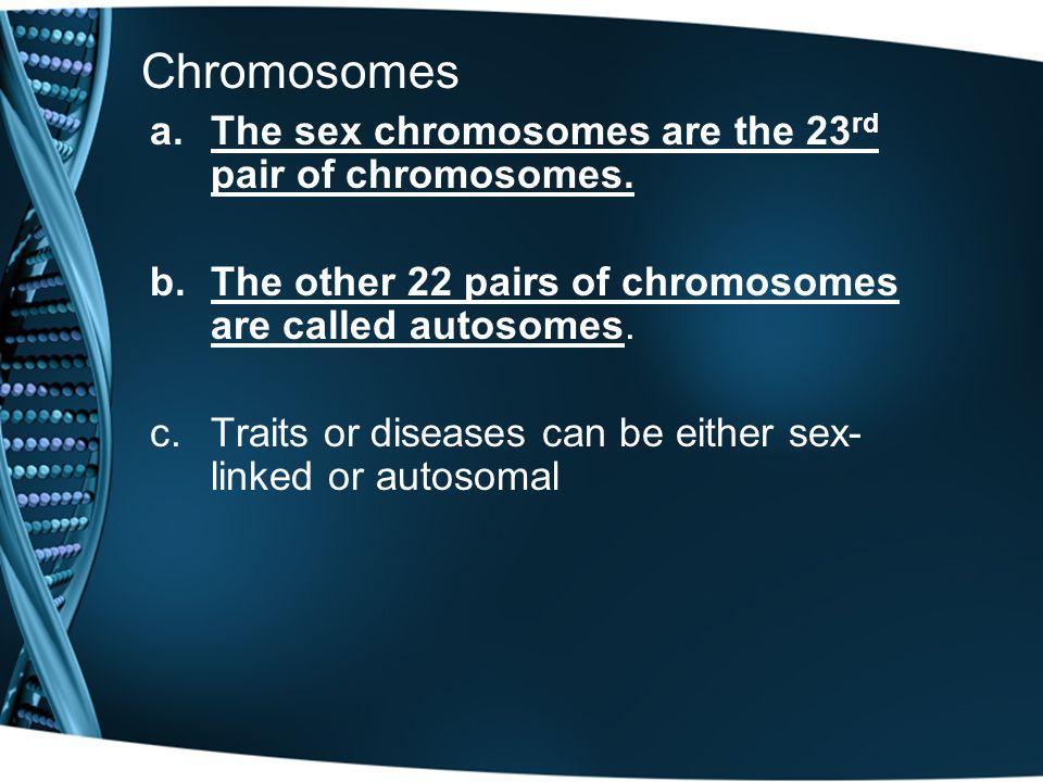 Chromosomes The sex chromosomes are the 23rd pair of chromosomes.