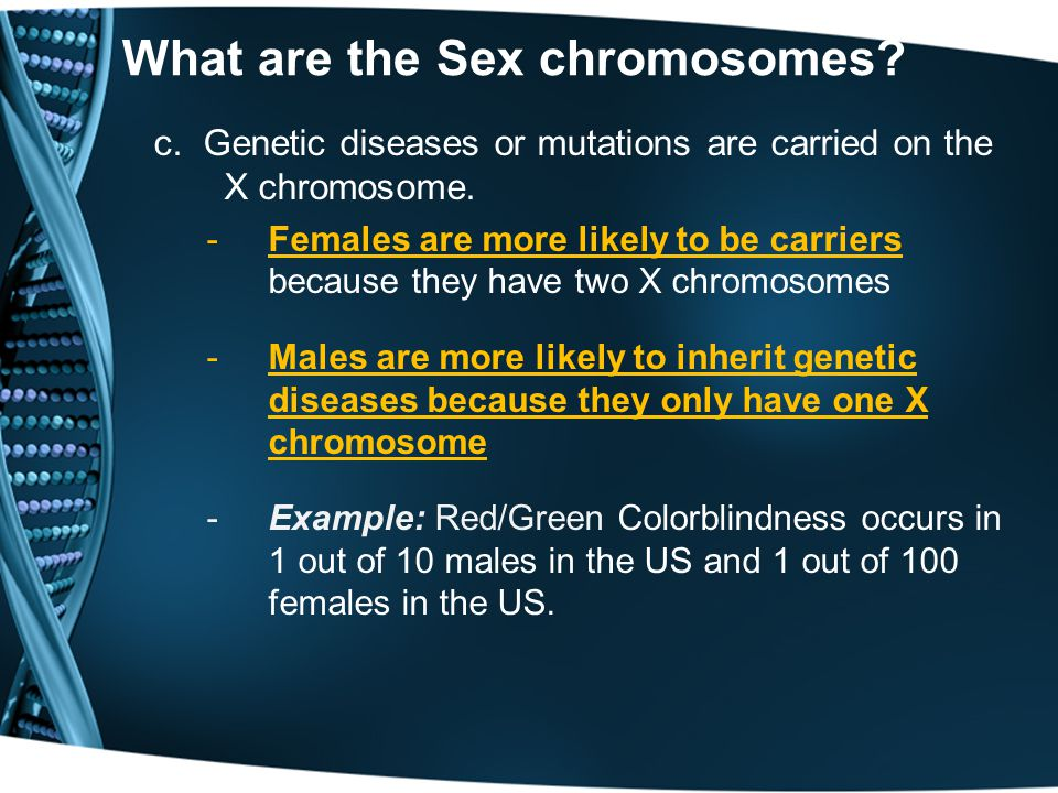 What are the Sex chromosomes
