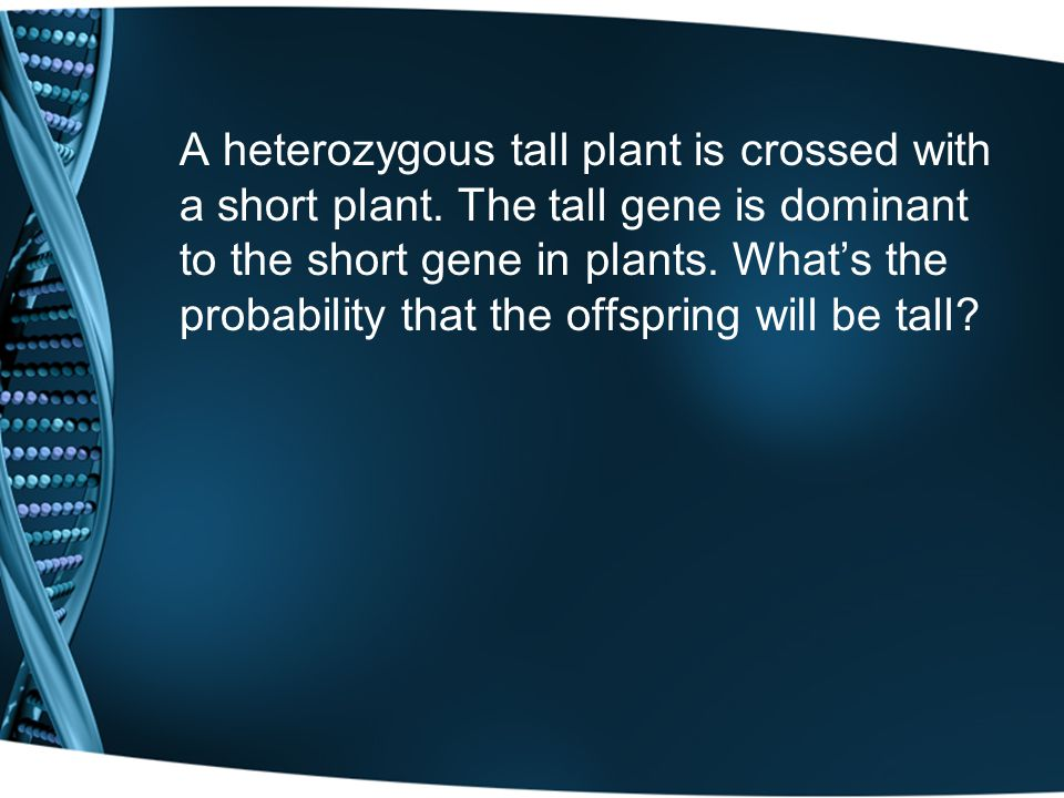 A heterozygous tall plant is crossed with a short plant