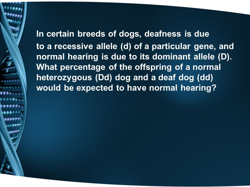 In certain breeds of dogs, deafness is due to a recessive allele (d) of a particular gene, and normal hearing is due to its dominant allele (D).