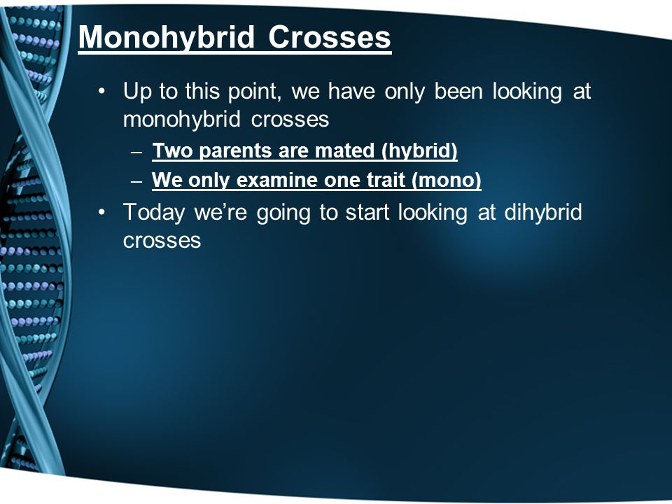 Monohybrid Crosses Up to this point, we have only been looking at monohybrid crosses. Two parents are mated (hybrid)