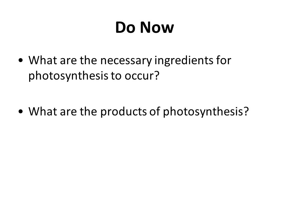 Do Now What are the necessary ingredients for photosynthesis to occur