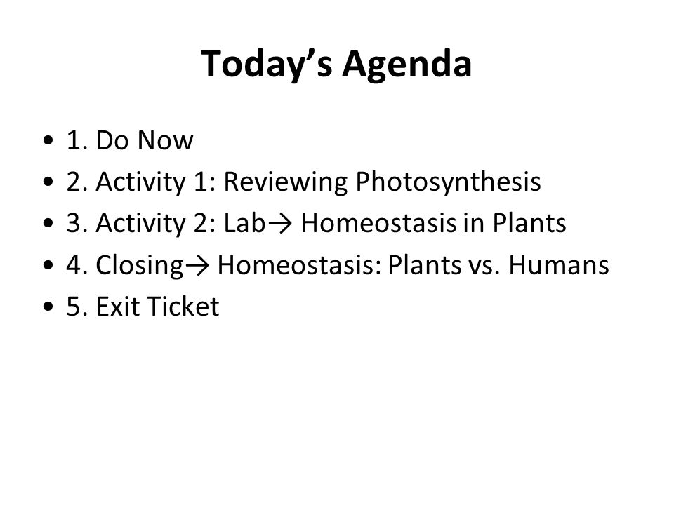 Today's Agenda 1. Do Now 2. Activity 1: Reviewing Photosynthesis