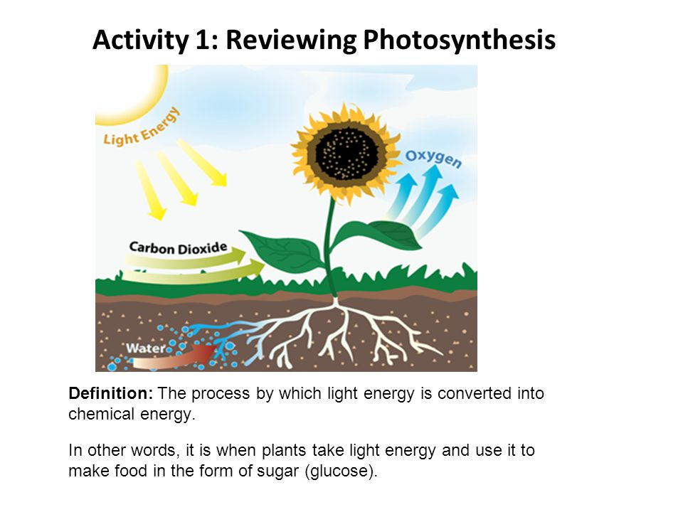 Activity 1: Reviewing Photosynthesis