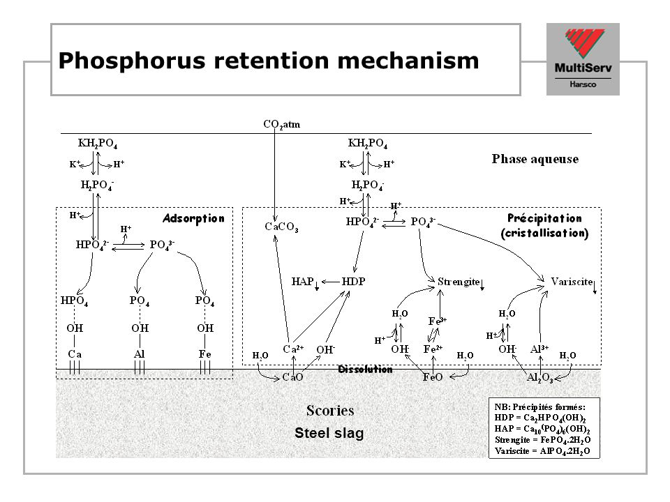 Phosphorus retention mechanism