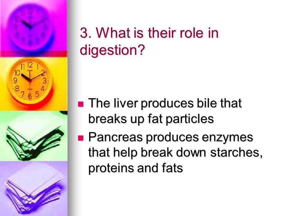 3. What is their role in digestion