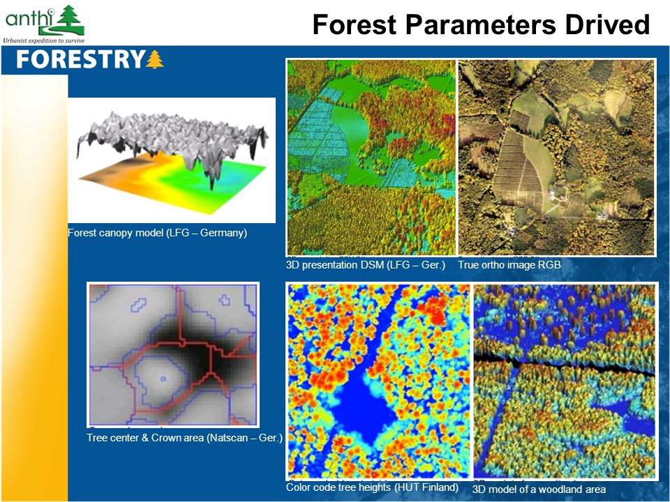 Forest Parameters Drived