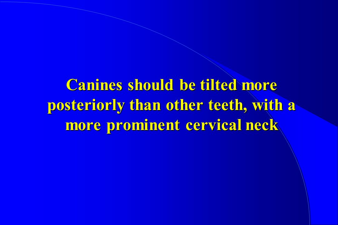 Canines should be tilted more posteriorly than other teeth, with a more prominent cervical neck