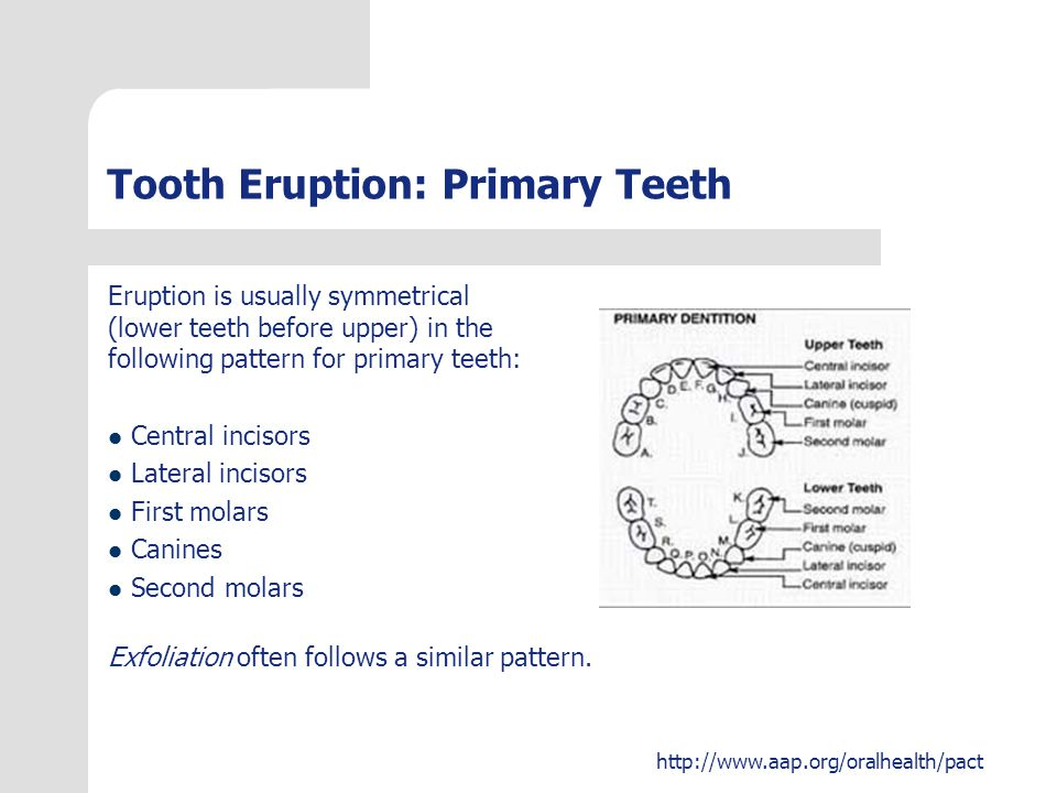 Tooth Eruption: Primary Teeth