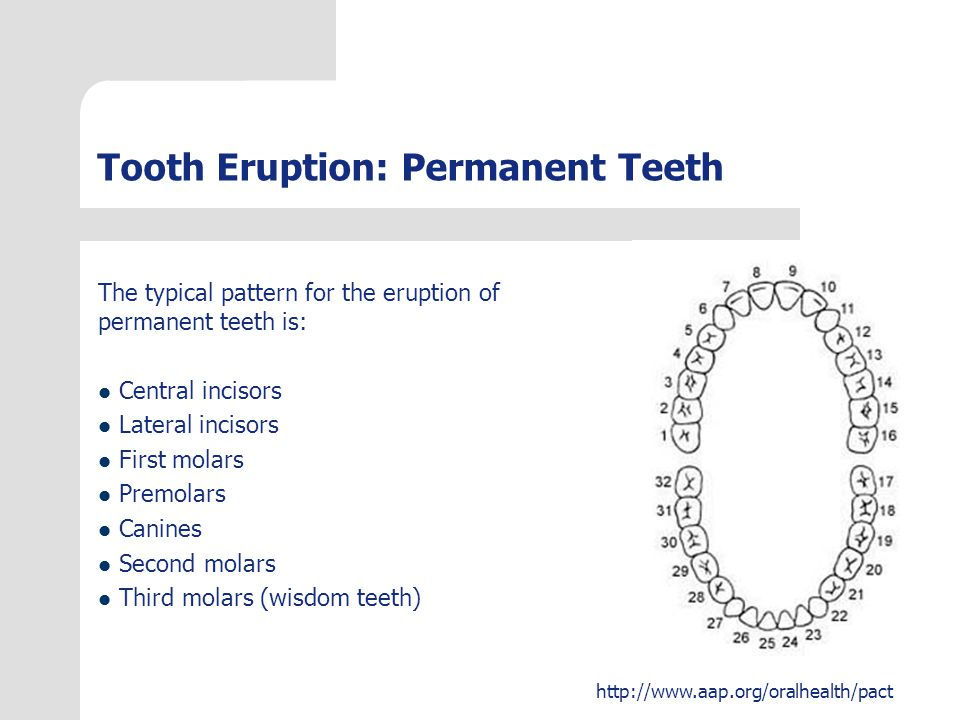 Tooth Eruption: Permanent Teeth