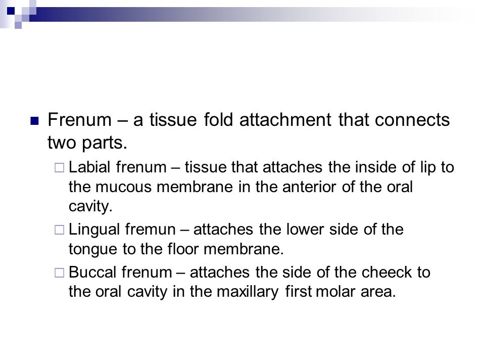 Frenum – a tissue fold attachment that connects two parts.