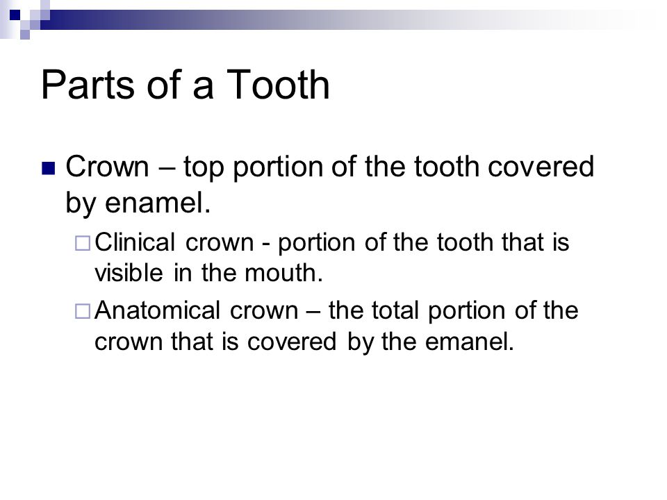 Parts of a Tooth Crown – top portion of the tooth covered by enamel.