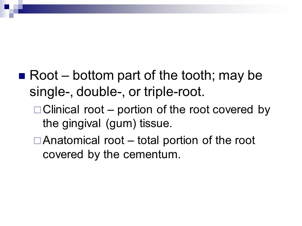 Root – bottom part of the tooth; may be single-, double-, or triple-root.