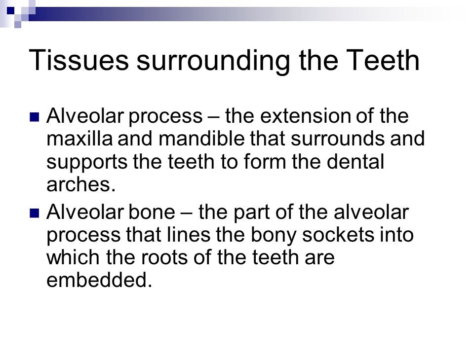 Tissues surrounding the Teeth