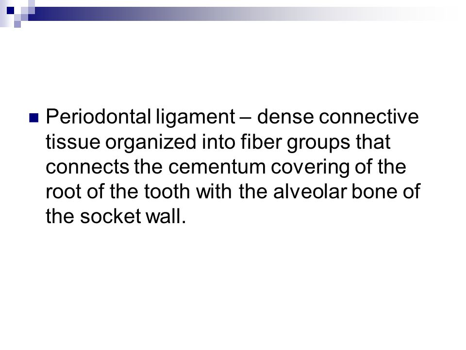 Periodontal ligament – dense connective tissue organized into fiber groups that connects the cementum covering of the root of the tooth with the alveolar bone of the socket wall.