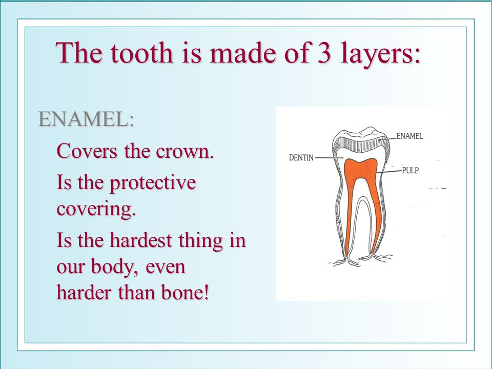 The tooth is made of 3 layers: