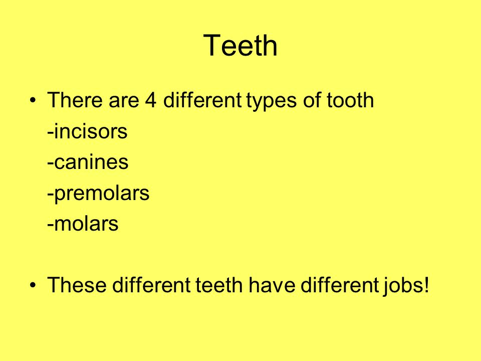 Teeth There are 4 different types of tooth -incisors -canines