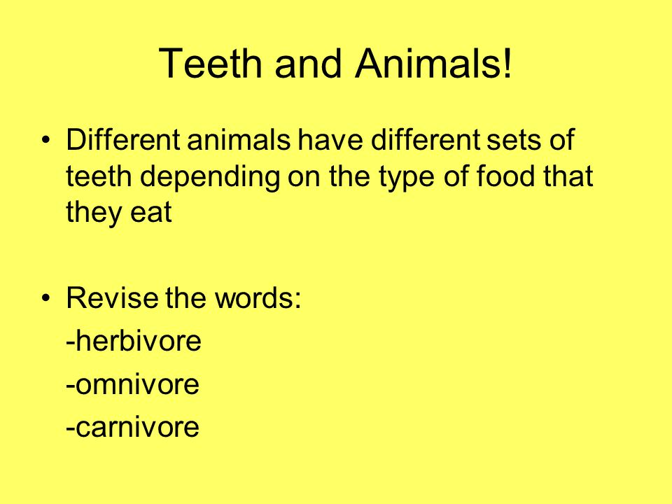 Teeth and Animals! Different animals have different sets of teeth depending on the type of food that they eat.