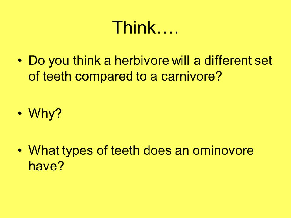 Think…. Do you think a herbivore will a different set of teeth compared to a carnivore.