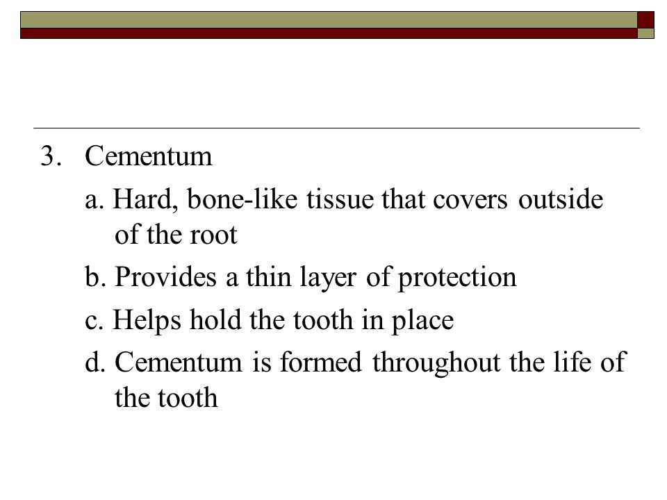 3. Cementum a. Hard, bone-like tissue that covers outside of the root. b. Provides a thin layer of protection.