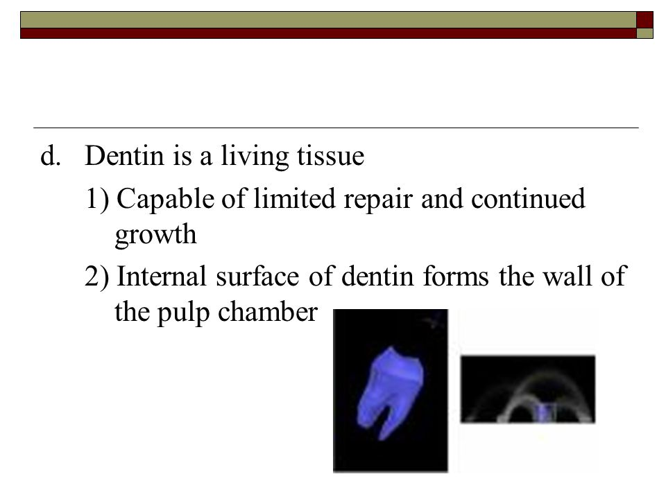 d. Dentin is a living tissue