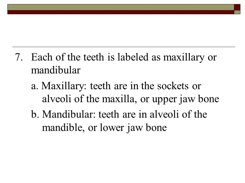 7. Each of the teeth is labeled as maxillary or mandibular