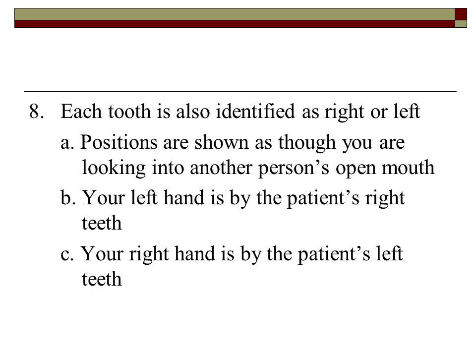 8. Each tooth is also identified as right or left