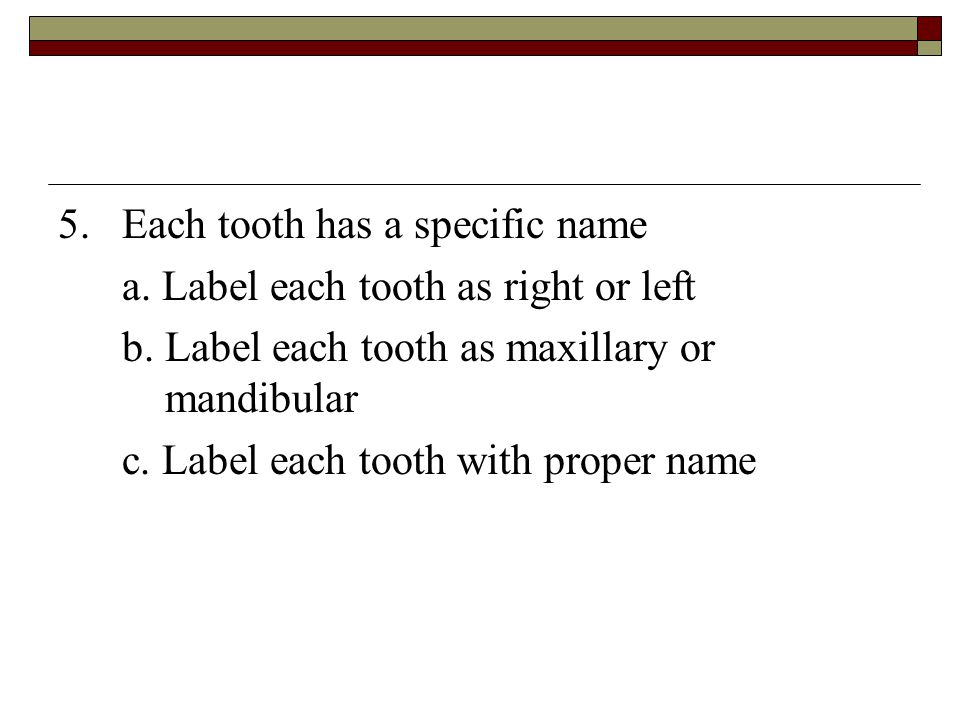 5. Each tooth has a specific name
