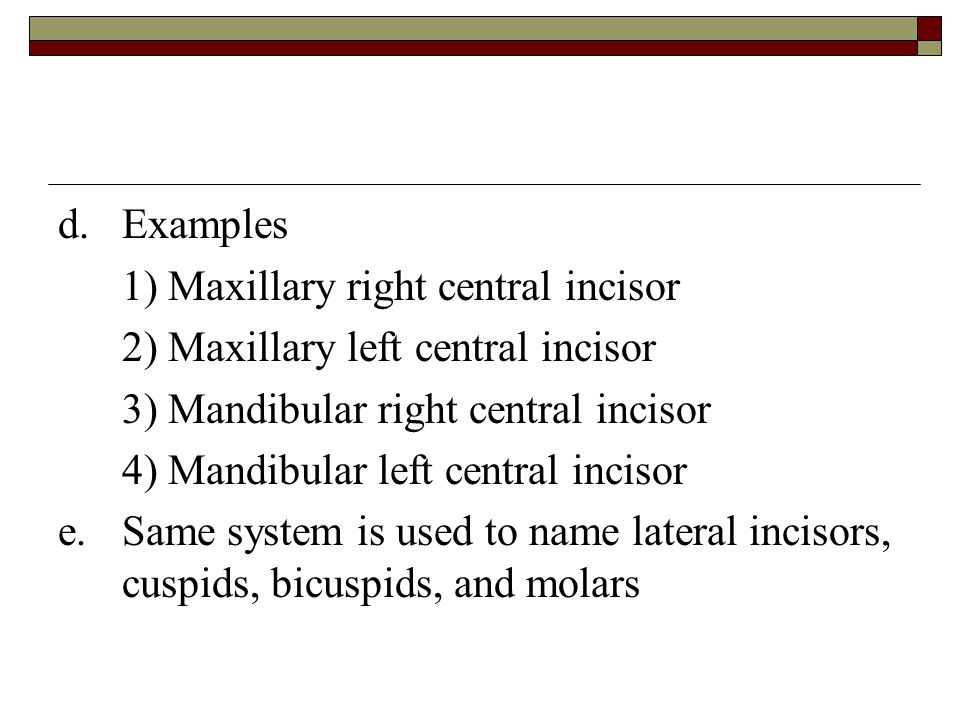 d. Examples 1) Maxillary right central incisor. 2) Maxillary left central incisor. 3) Mandibular right central incisor.