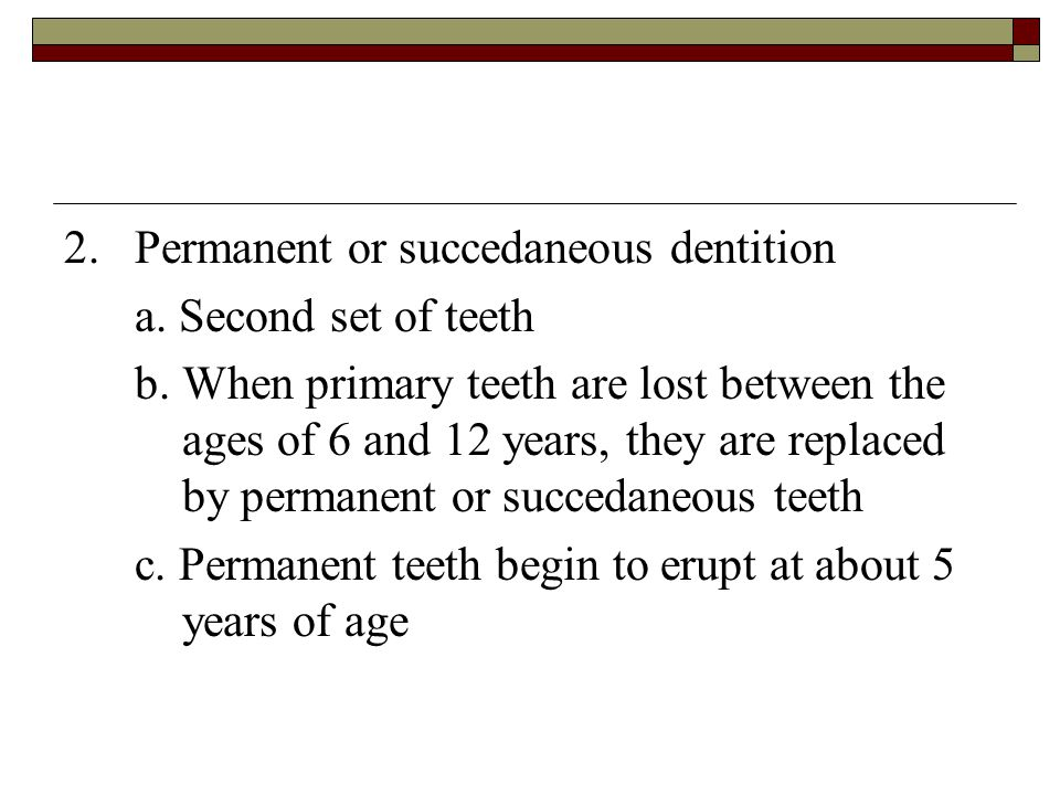 2. Permanent or succedaneous dentition