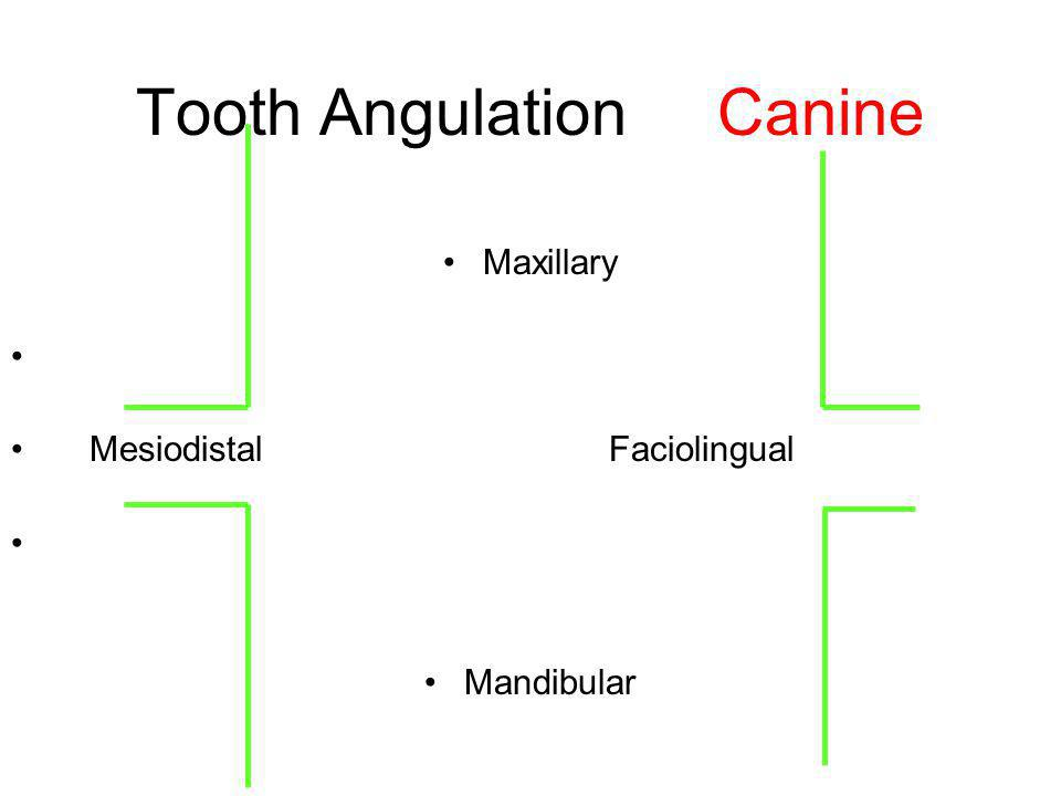 Tooth Angulation Canine