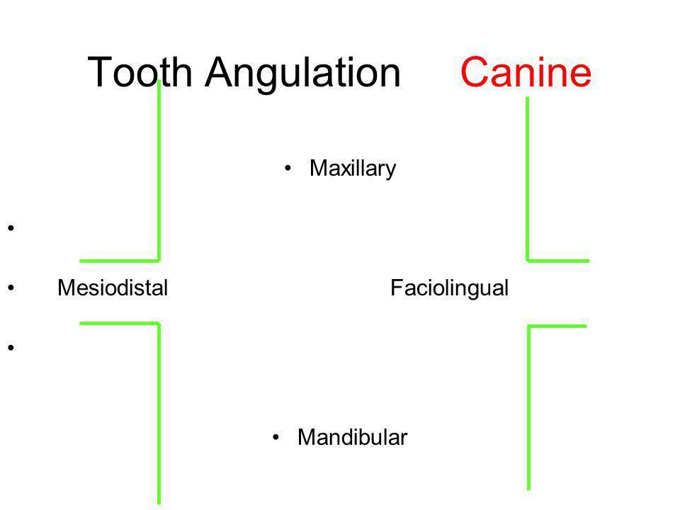 Tooth Angulation Canine