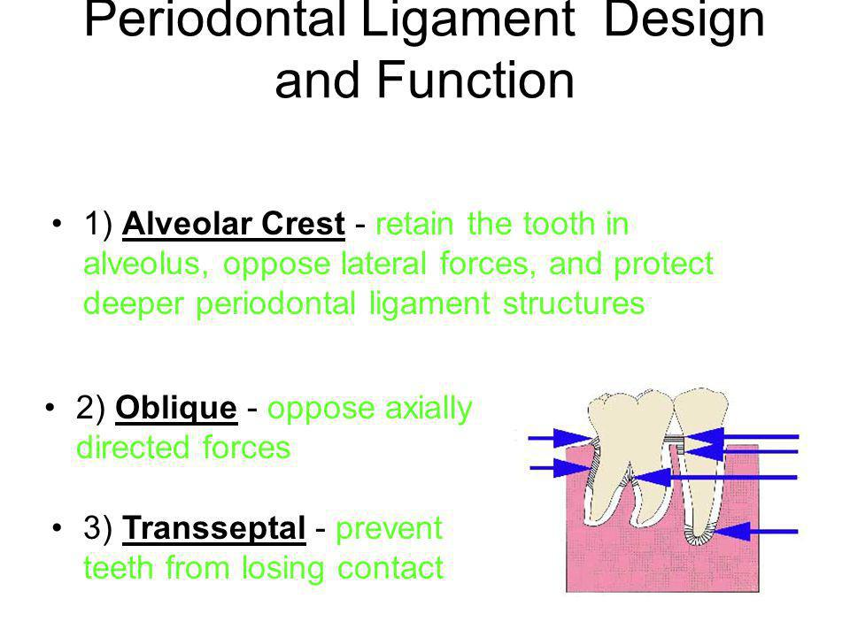 Periodontal Ligament Design and Function