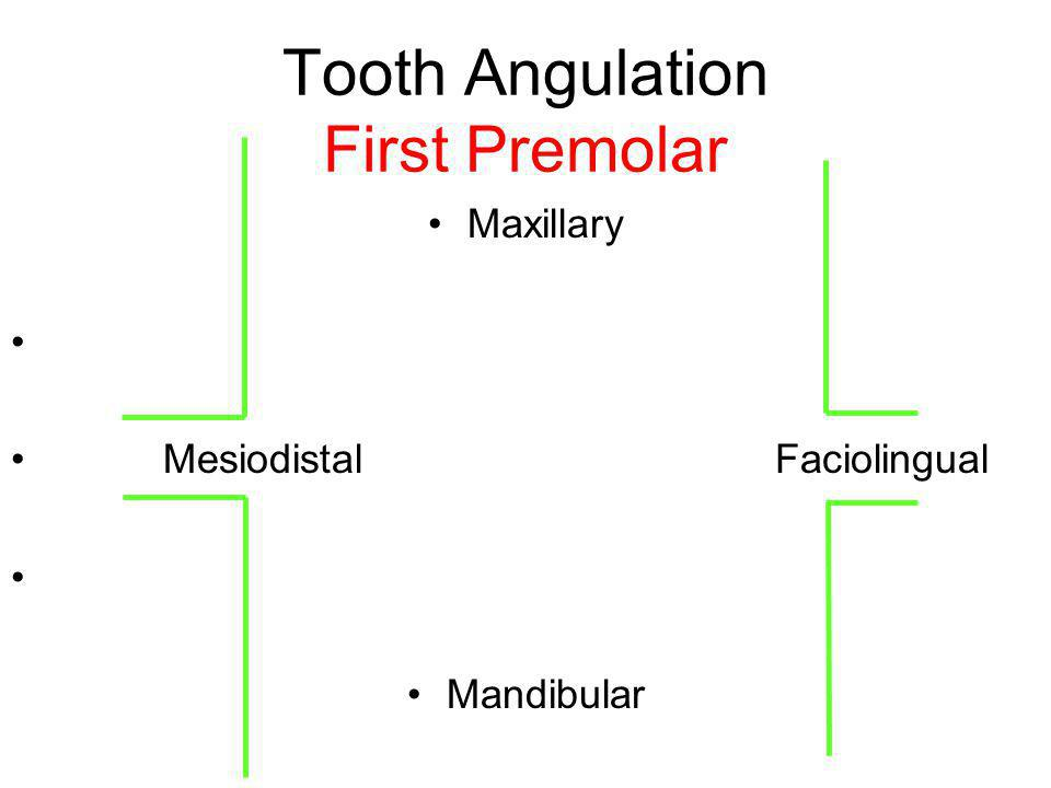 Tooth Angulation First Premolar