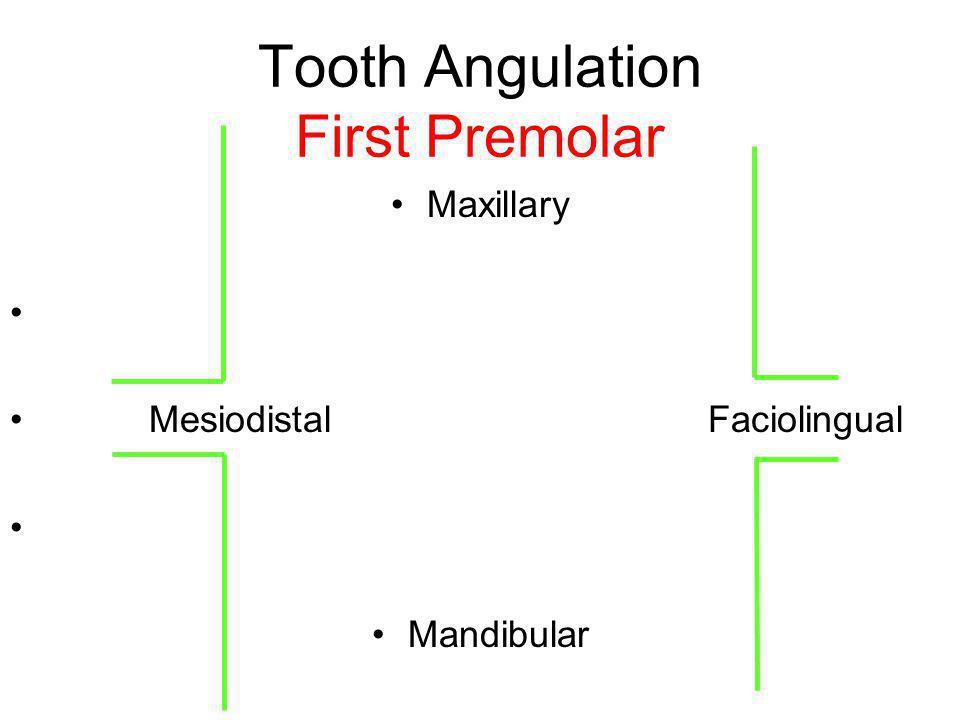 Tooth Angulation First Premolar