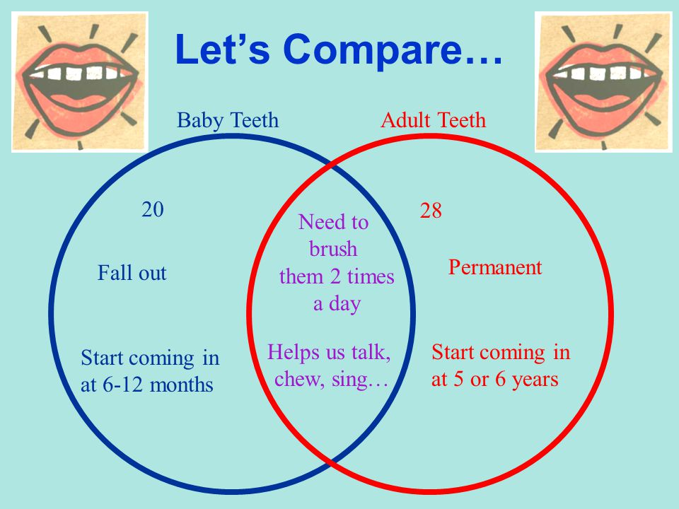 Let's Compare… Baby Teeth Adult Teeth 20 28 Need to brush them 2 times