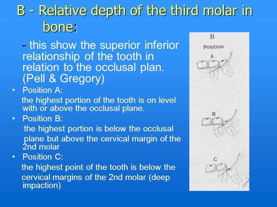 B - Relative depth of the third molar in bone: