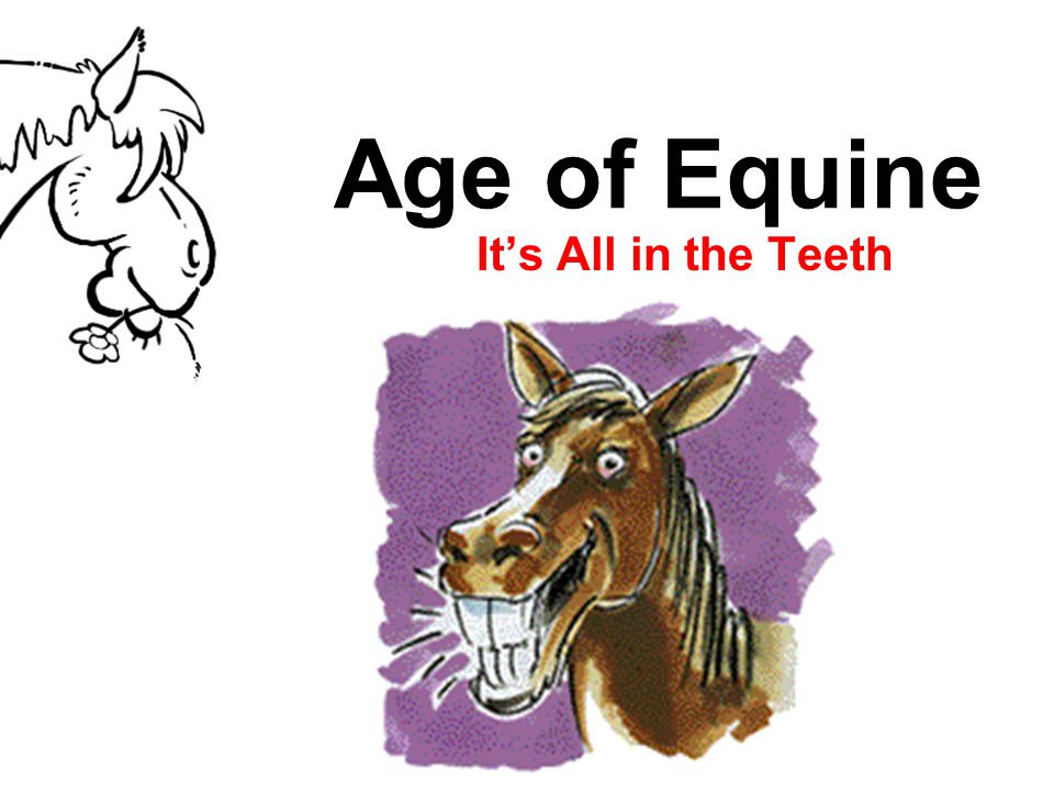 Age of Equine It's All in the Teeth