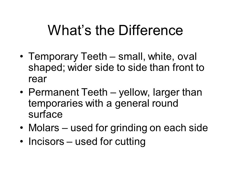 What's the Difference Temporary Teeth – small, white, oval shaped; wider side to side than front to rear.