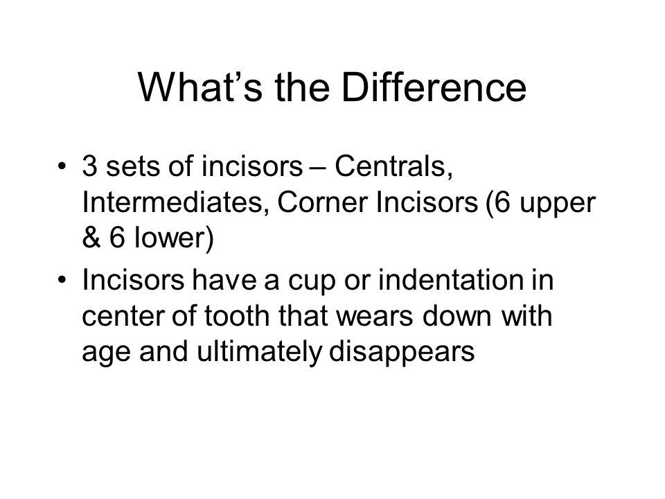 What's the Difference 3 sets of incisors – Centrals, Intermediates, Corner Incisors (6 upper & 6 lower)