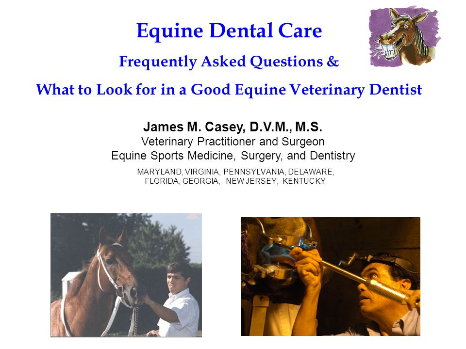 Equine Dental Care Frequently Asked Questions &