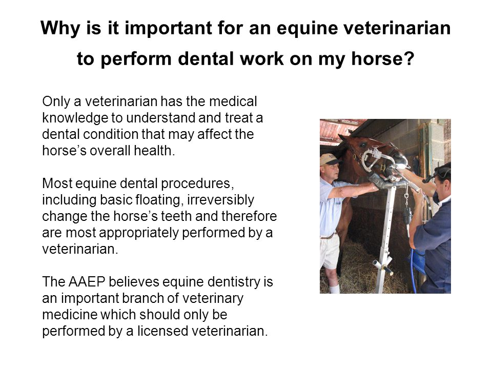 Why is it important for an equine veterinarian to perform dental work on my horse