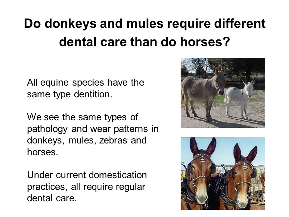 Do donkeys and mules require different dental care than do horses