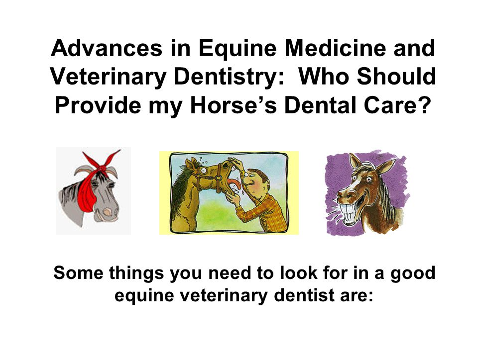 Advances in Equine Medicine and Veterinary Dentistry: Who Should Provide my Horse's Dental Care