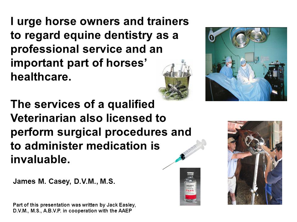 I urge horse owners and trainers to regard equine dentistry as a professional service and an important part of horses' healthcare.