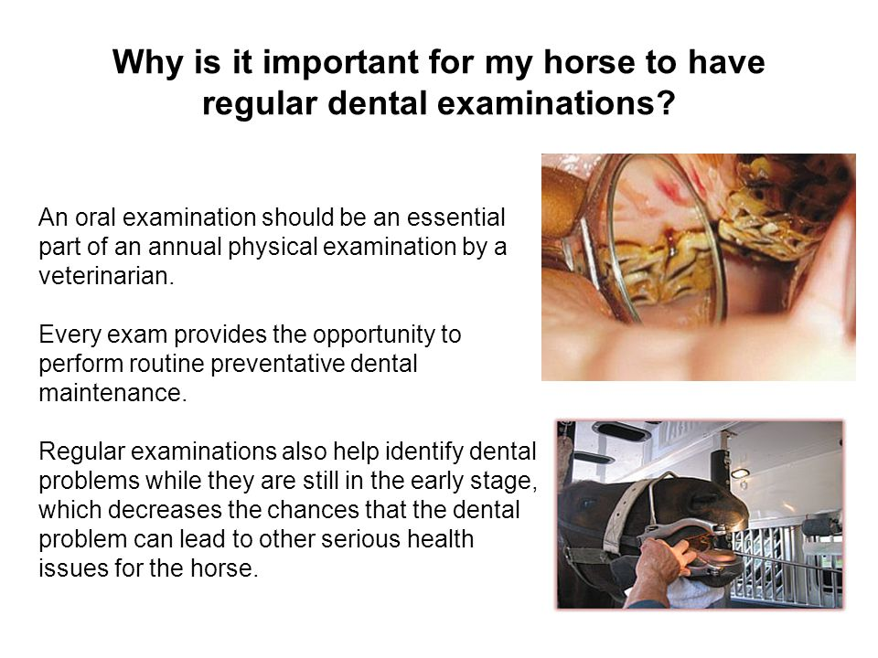Why is it important for my horse to have regular dental examinations